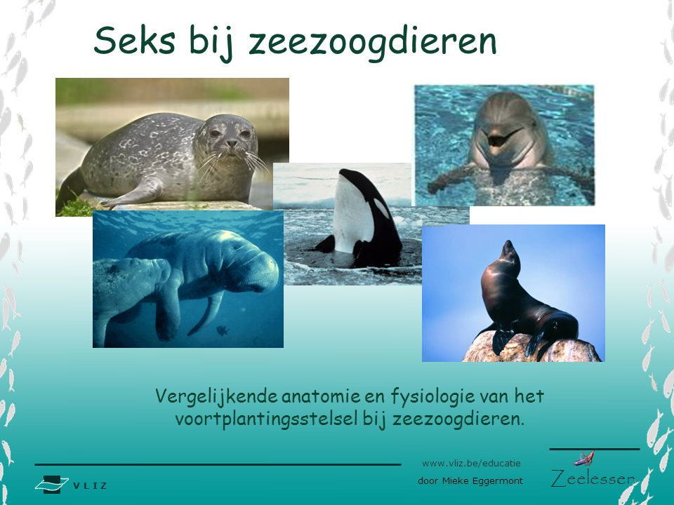 Seks bij zeezoogdieren