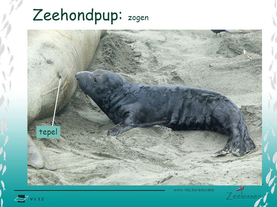 Zeehondpup: zogen tepel
