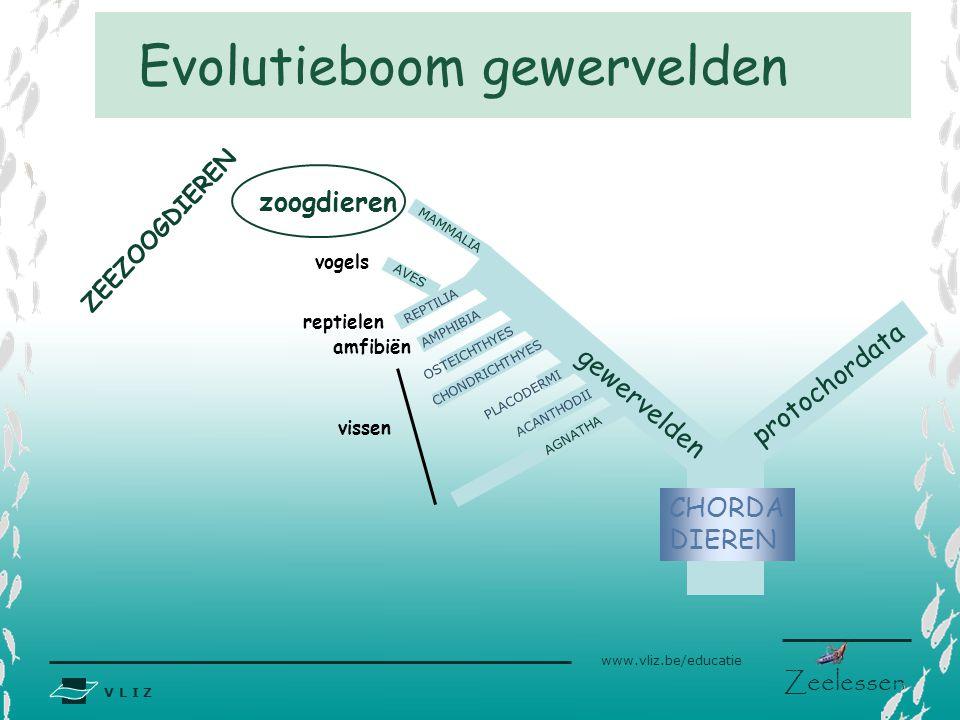Evolutieboom gewervelden