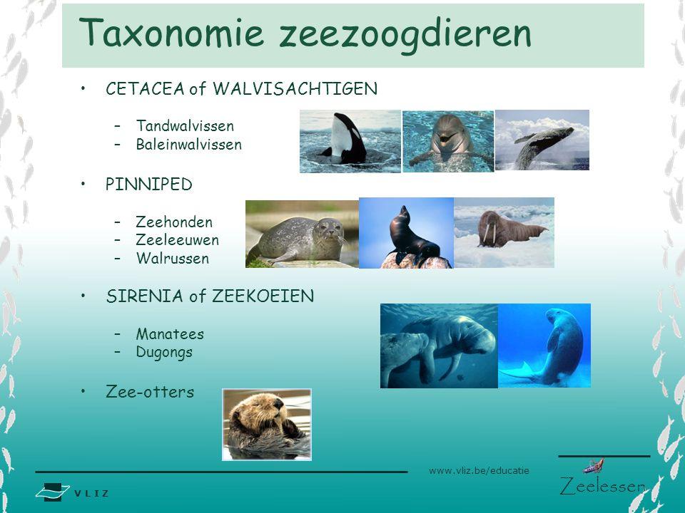 Taxonomie zeezoogdieren