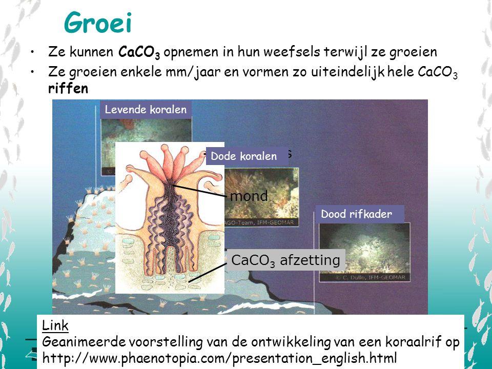 Groei Ze kunnen CaCO3 opnemen in hun weefsels terwijl ze groeien