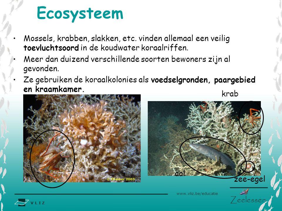Ecosysteem Mossels, krabben, slakken, etc. vinden allemaal een veilig toevluchtsoord in de koudwater koraalriffen.