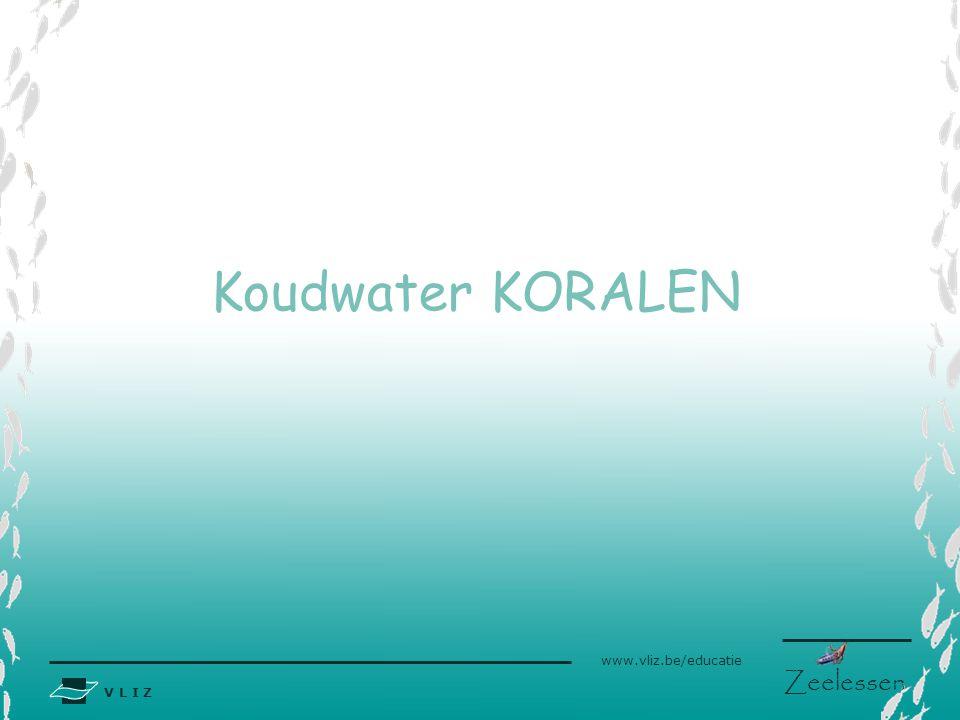 Koudwater KORALEN