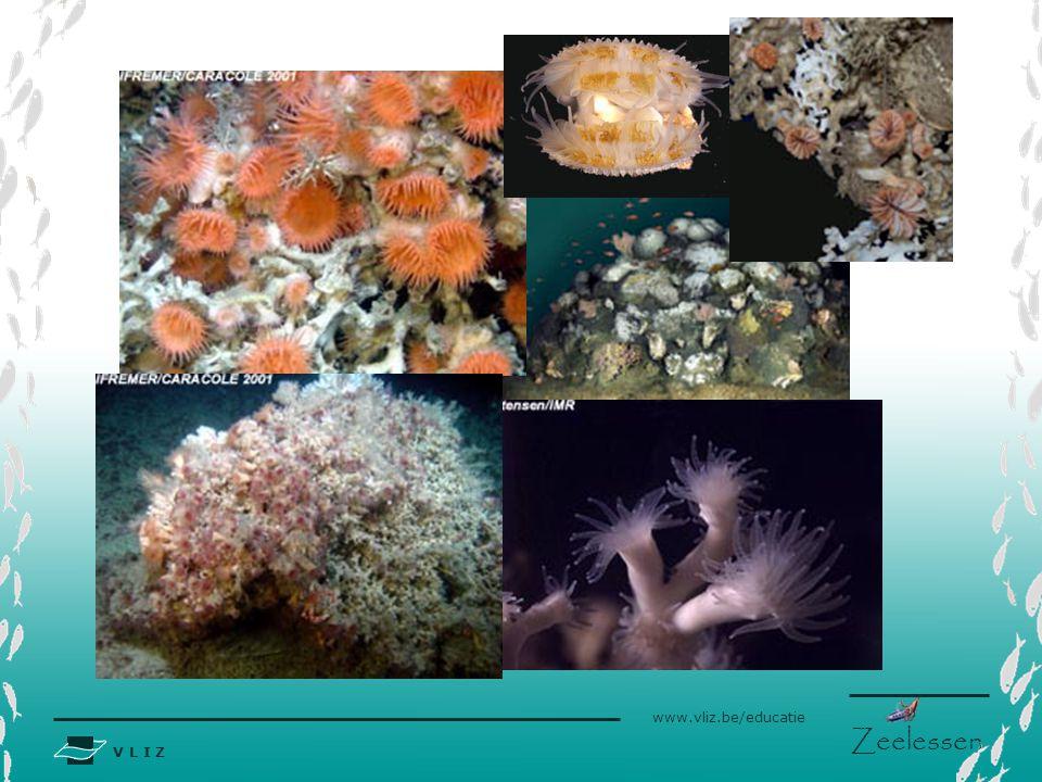 www.eu-hermes.net  coral reefs