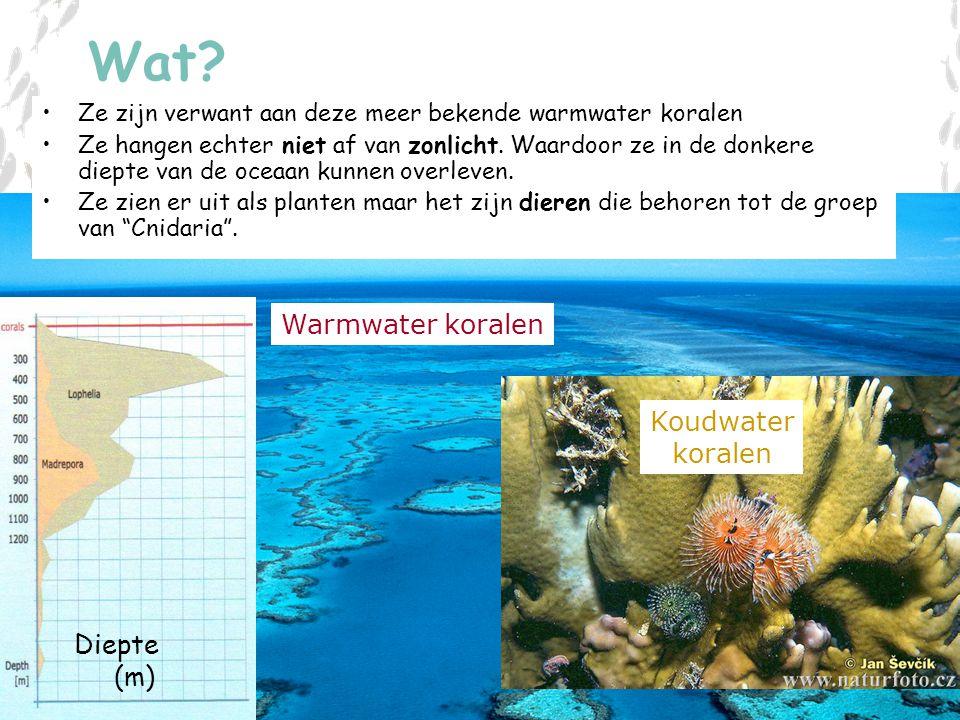 Wat Warmwater koralen Koudwater koralen Diepte (m)