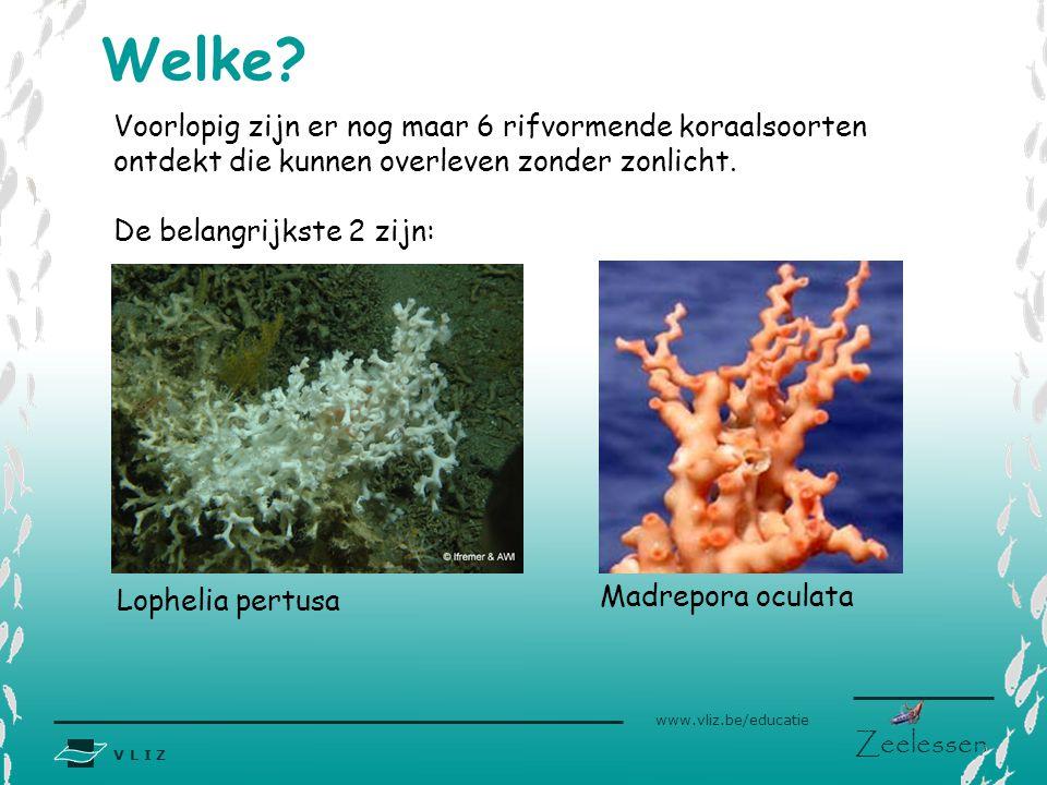 Welke Voorlopig zijn er nog maar 6 rifvormende koraalsoorten