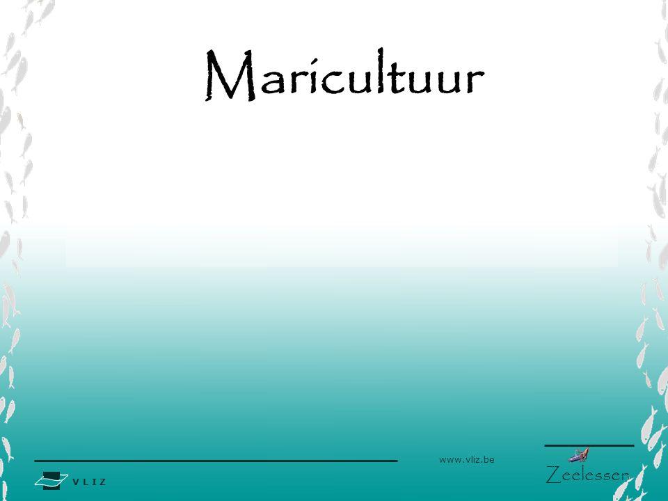 Maricultuur
