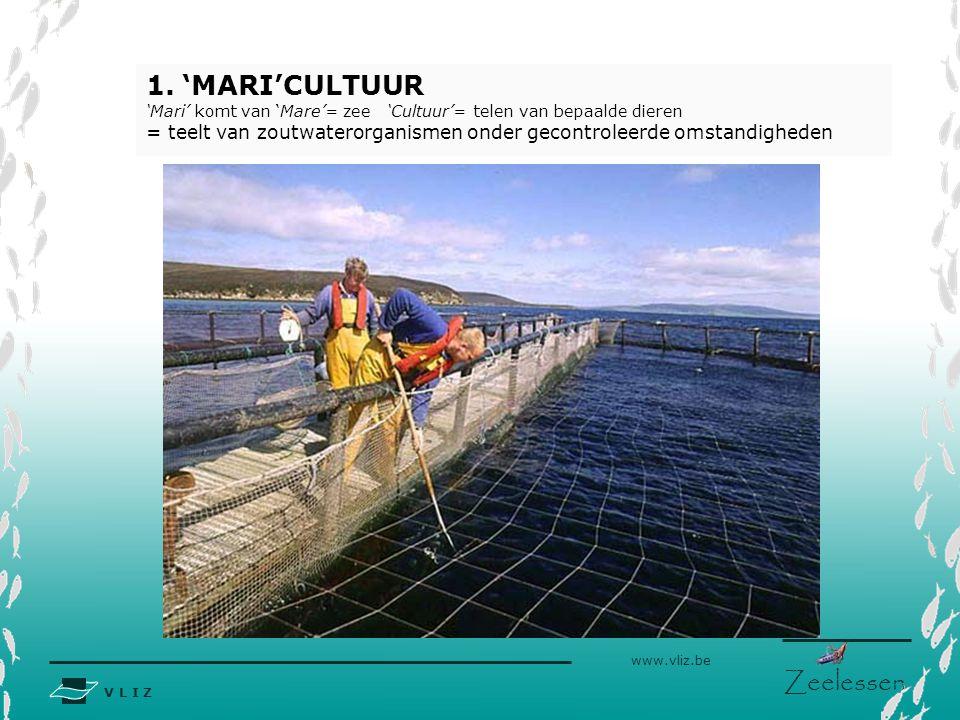 'MARI'CULTUUR 'Mari' komt van 'Mare'= zee 'Cultuur'= telen van bepaalde dieren.