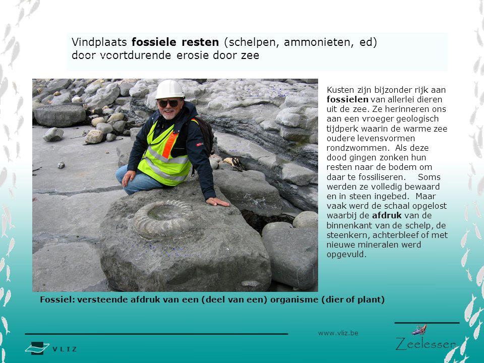 Vindplaats fossiele resten (schelpen, ammonieten, ed)