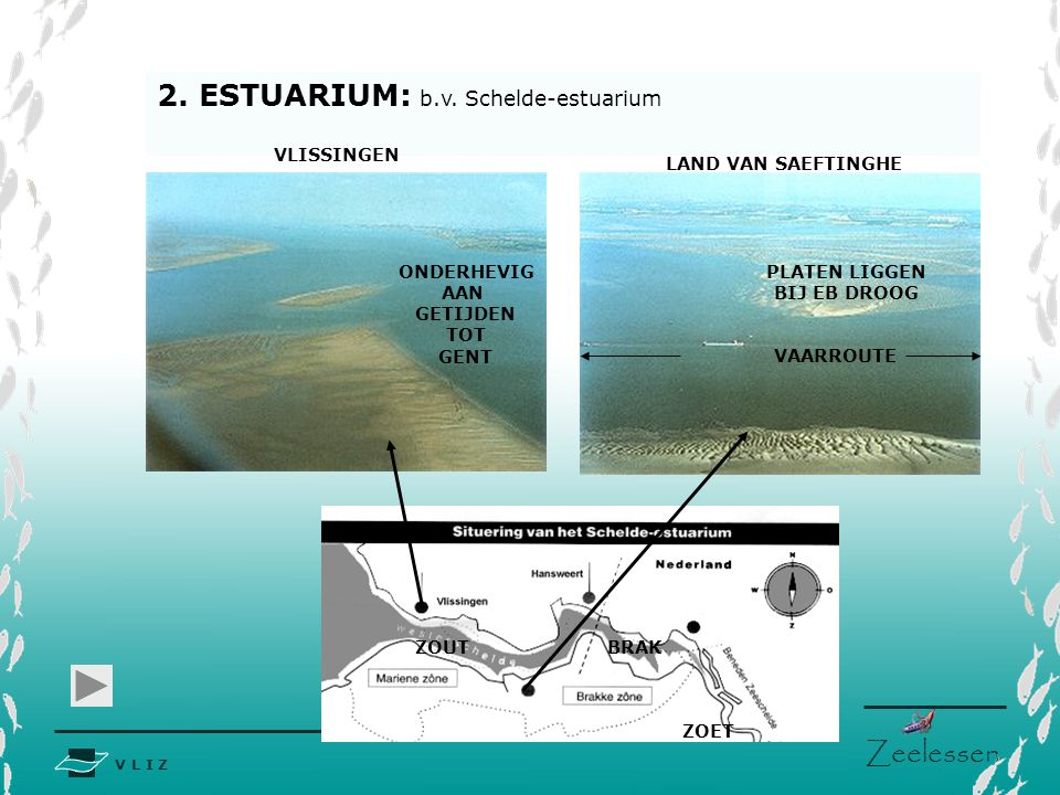 2. ESTUARIUM: b.v. Schelde-estuarium