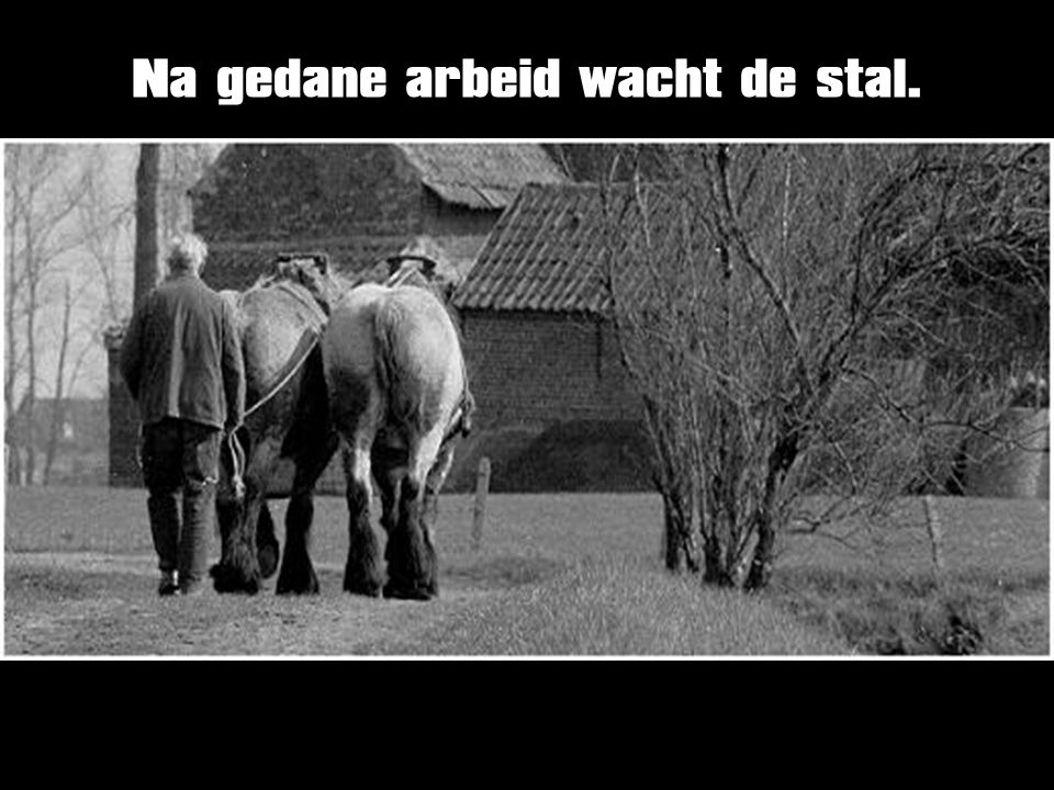 Na gedane arbeid wacht de stal.