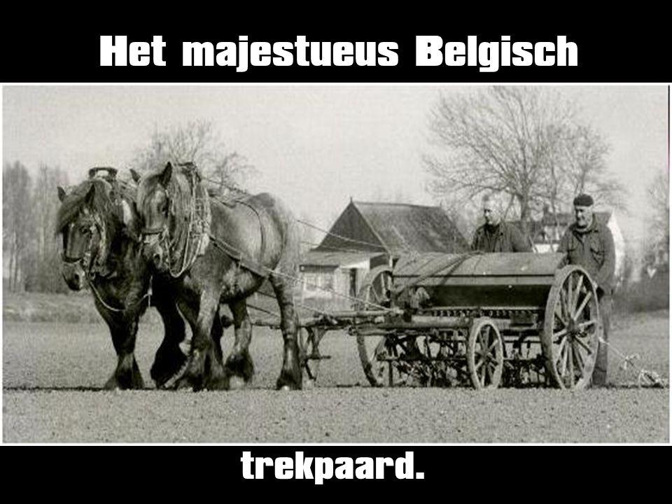 Het majestueus Belgisch
