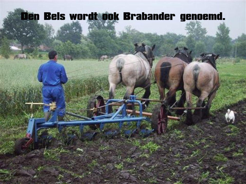 Den Bels wordt ook Brabander genoemd.