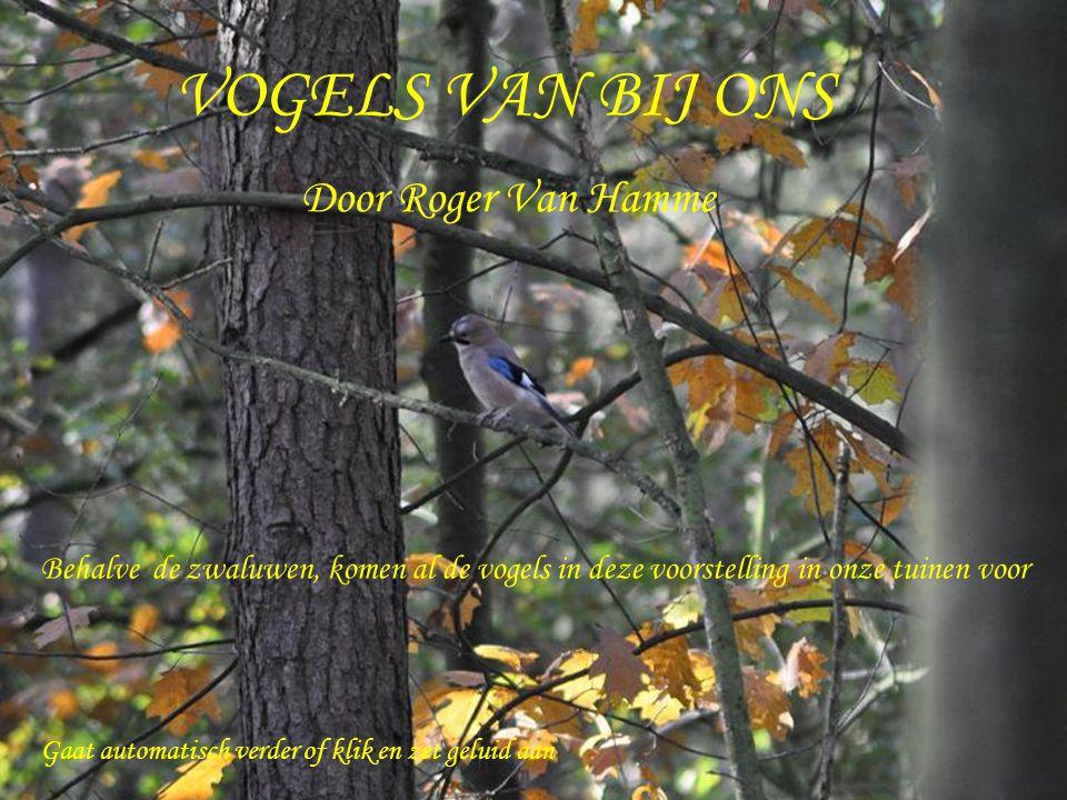 VOGELS VAN BIJ ONS Door Roger Van Hamme