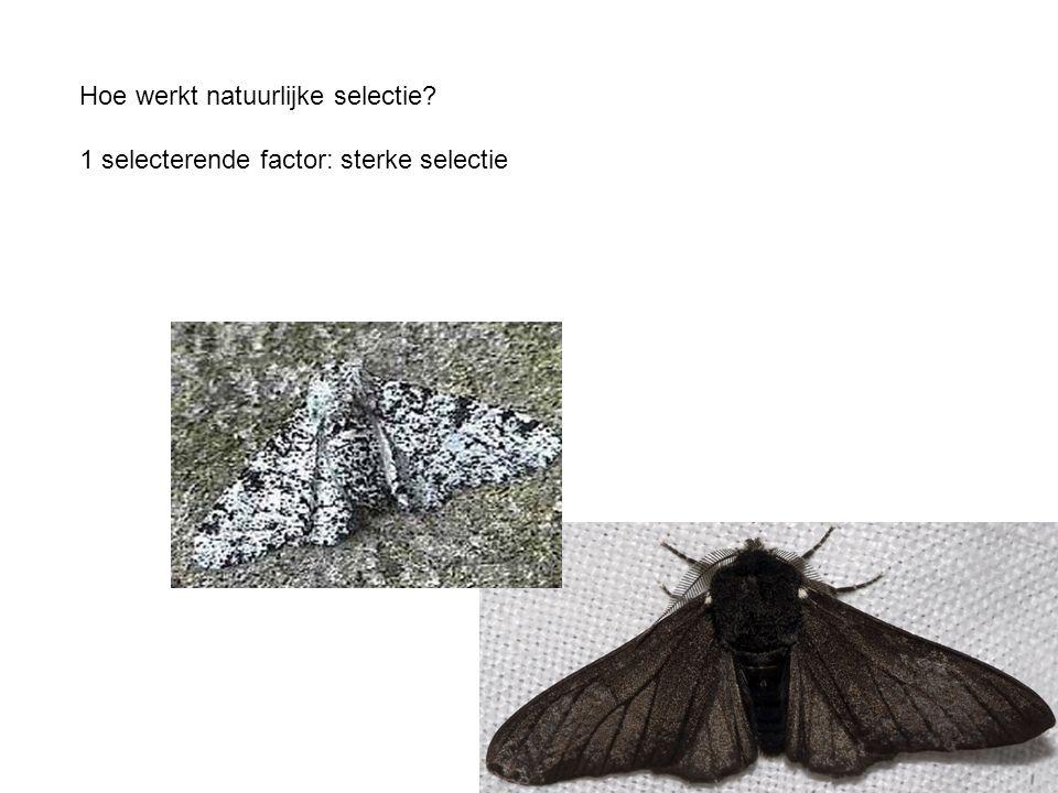 Hoe werkt natuurlijke selectie 1 selecterende factor: sterke selectie