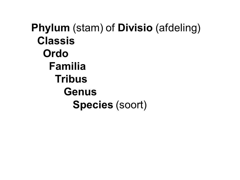 Phylum (stam) of Divisio (afdeling) Classis Ordo Familia Tribus Genus