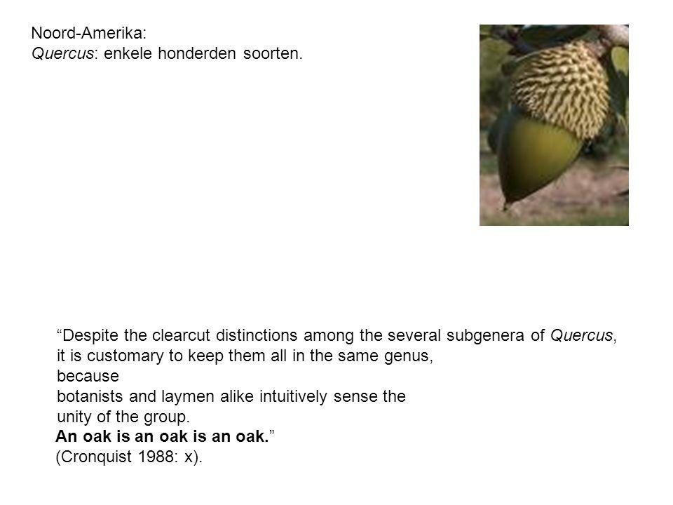 Quercus: enkele honderden soorten.