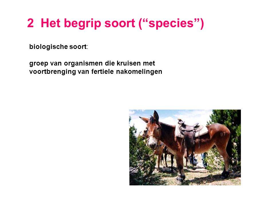 2 Het begrip soort ( species )