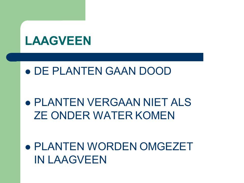 LAAGVEEN DE PLANTEN GAAN DOOD
