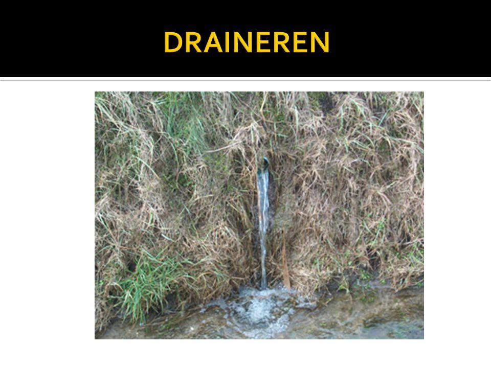 DRAINEREN