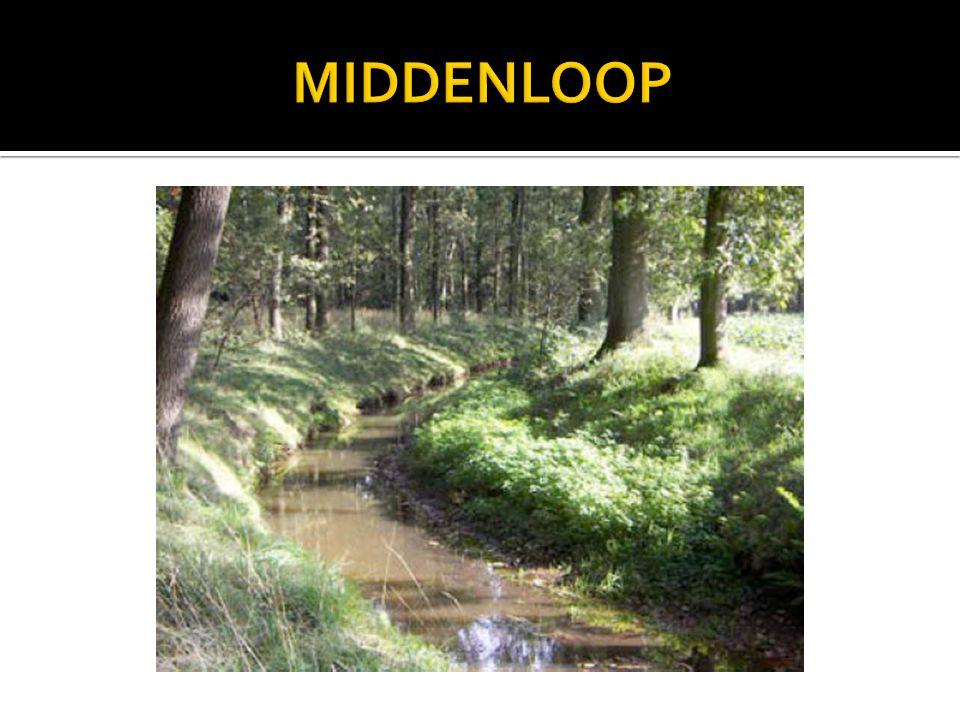 MIDDENLOOP