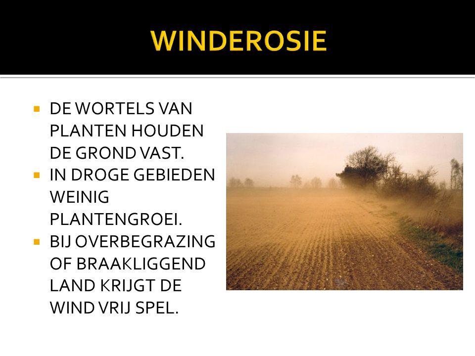WINDEROSIE DE WORTELS VAN PLANTEN HOUDEN DE GROND VAST.
