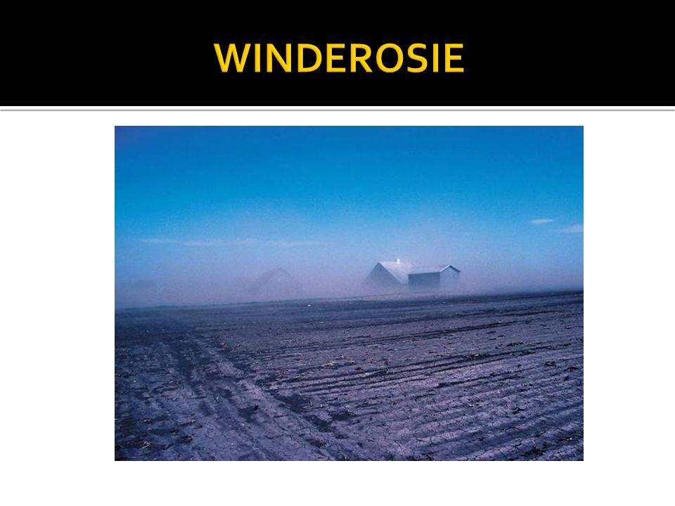 WINDEROSIE