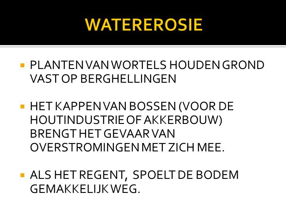 WATEREROSIE PLANTEN VAN WORTELS HOUDEN GROND VAST OP BERGHELLINGEN