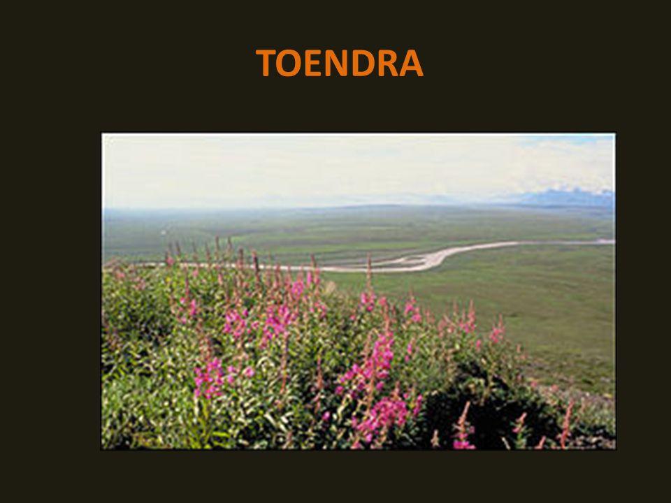 TOENDRA