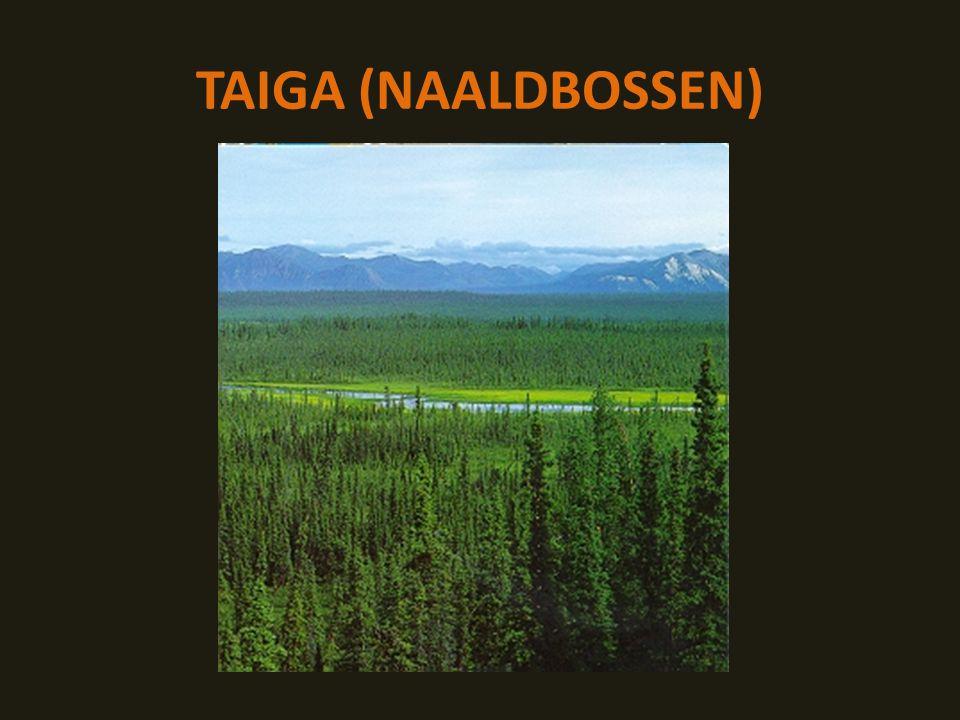 TAIGA (NAALDBOSSEN)