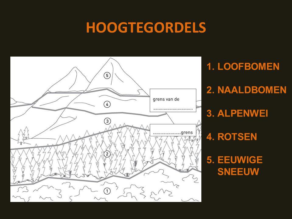 HOOGTEGORDELS LOOFBOMEN NAALDBOMEN ALPENWEI ROTSEN EEUWIGE SNEEUW
