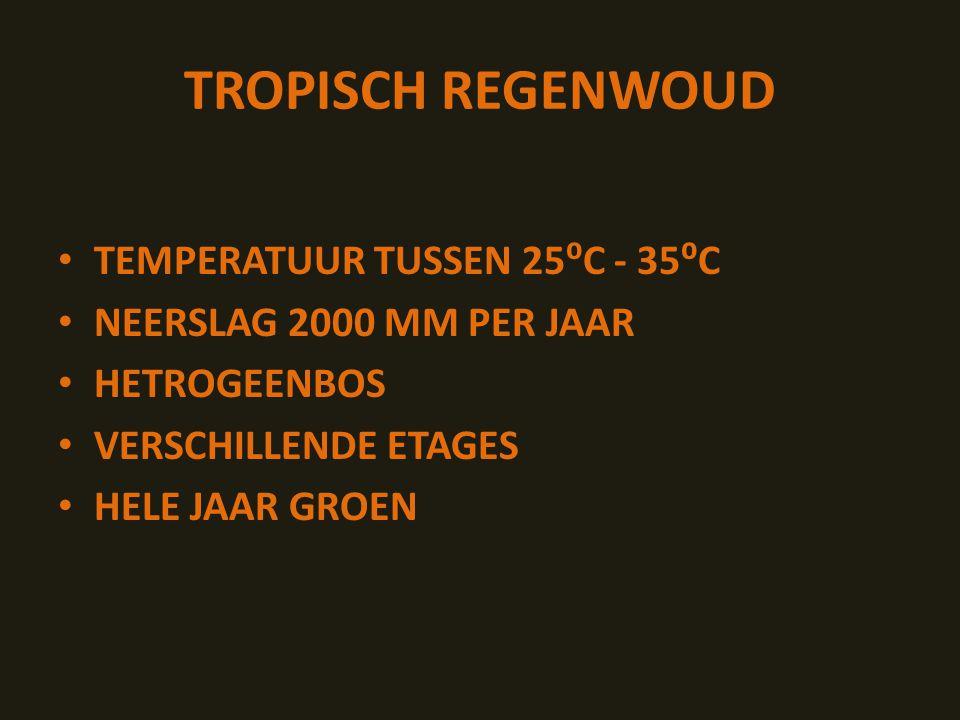 TROPISCH REGENWOUD TEMPERATUUR TUSSEN 25⁰C - 35⁰C