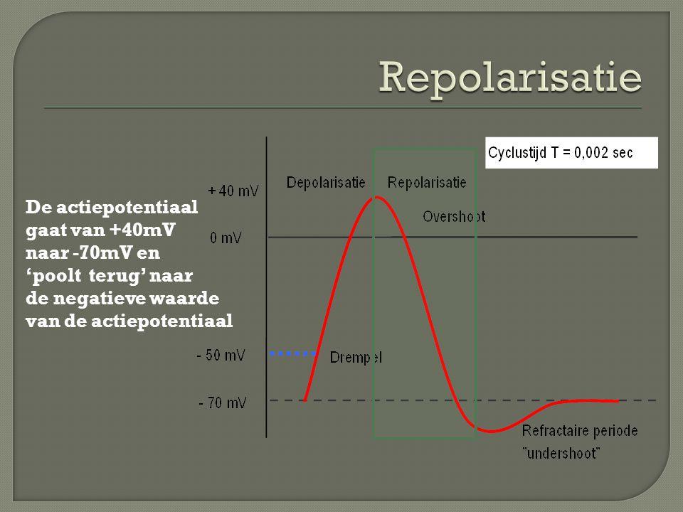 Repolarisatie De actiepotentiaal gaat van +40mV naar -70mV en 'poolt terug' naar de negatieve waarde.