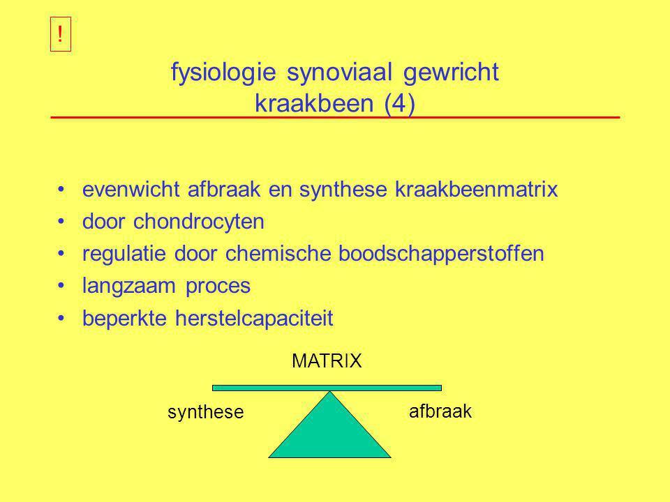 fysiologie synoviaal gewricht kraakbeen (4)
