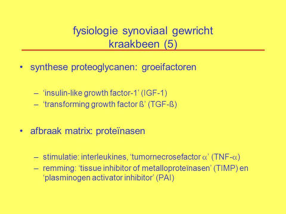 fysiologie synoviaal gewricht kraakbeen (5)