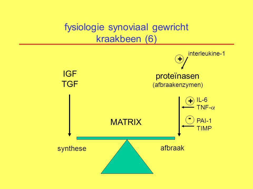 fysiologie synoviaal gewricht kraakbeen (6)