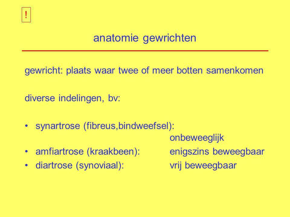 ! anatomie gewrichten. gewricht: plaats waar twee of meer botten samenkomen. diverse indelingen, bv: