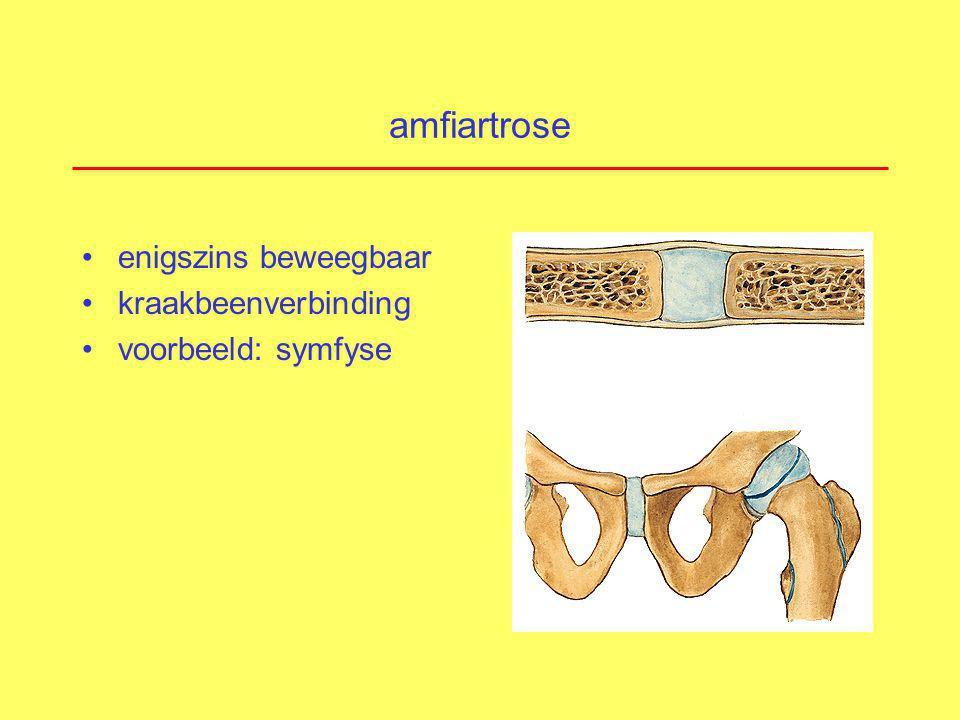amfiartrose enigszins beweegbaar kraakbeenverbinding