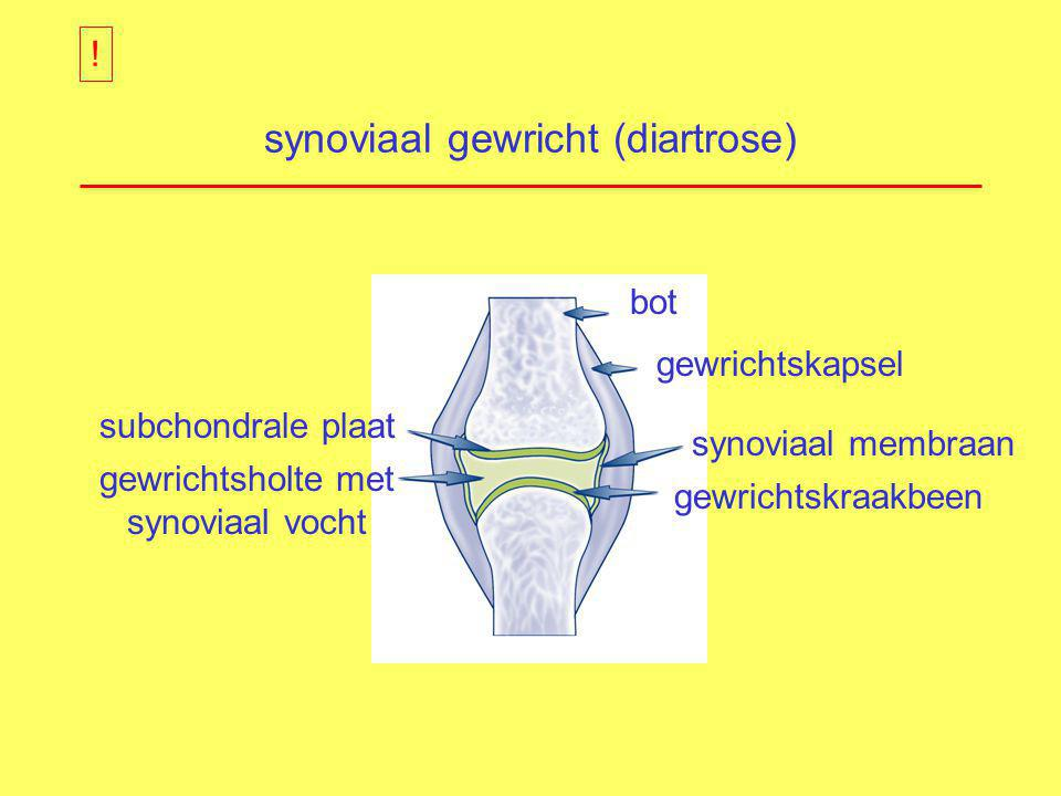 synoviaal gewricht (diartrose)