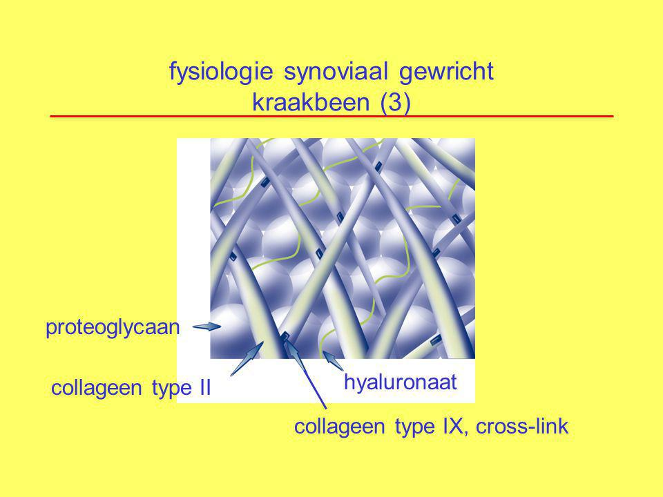 fysiologie synoviaal gewricht kraakbeen (3)