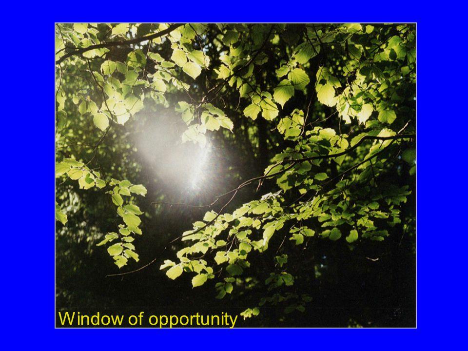 Ik zou graag in willen gaan op het concept window of opportunity