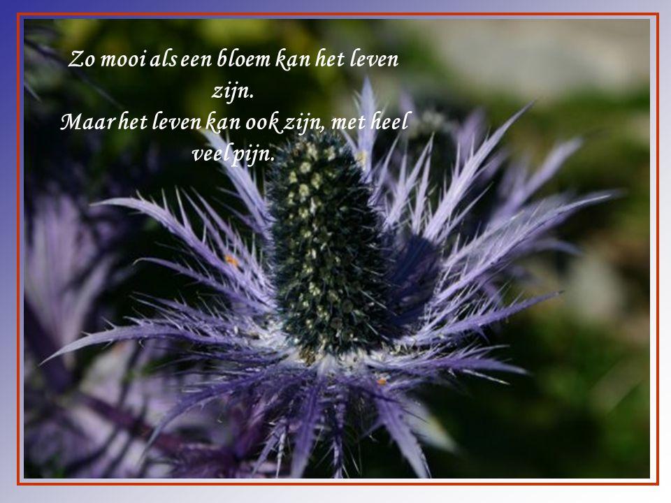 Zo mooi als een bloem kan het leven zijn.