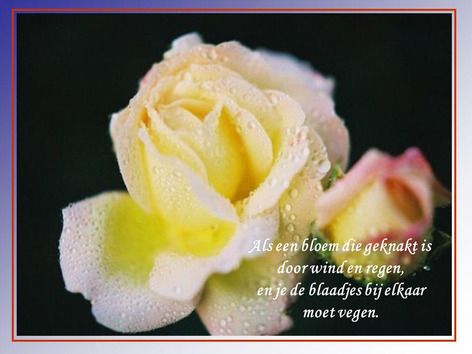 Als een bloem die geknakt is door wind en regen,