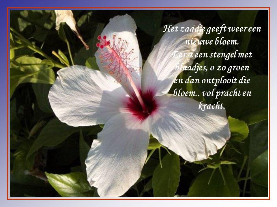 Het zaadje geeft weer een nieuwe bloem.
