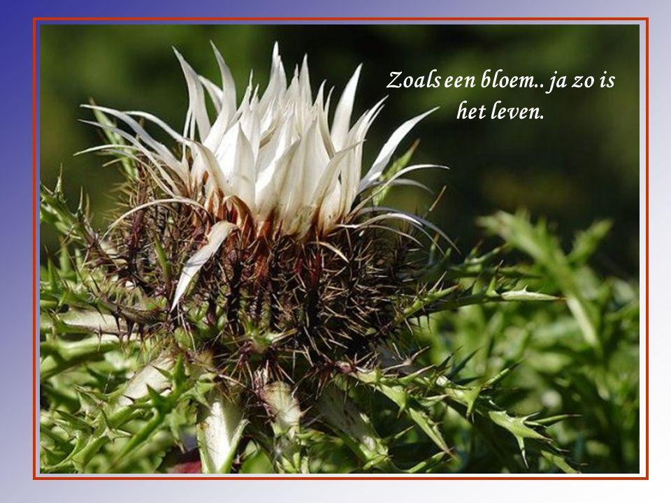 Zoals een bloem.. ja zo is het leven.