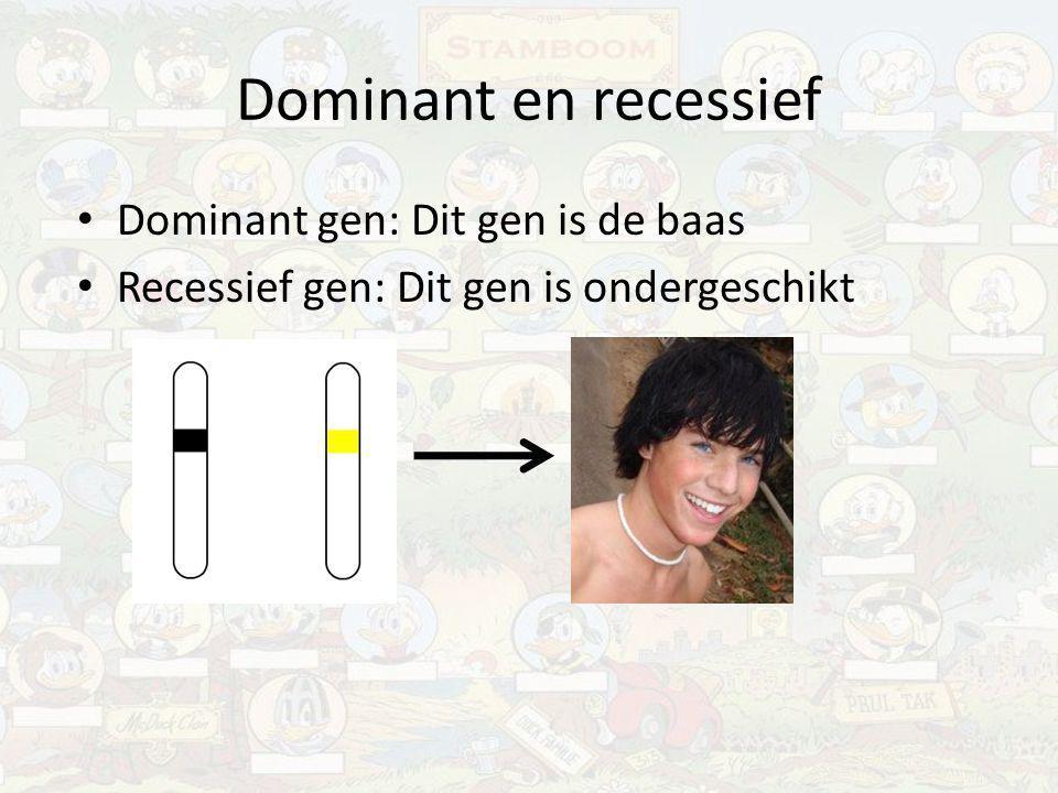 Dominant en recessief Dominant gen: Dit gen is de baas