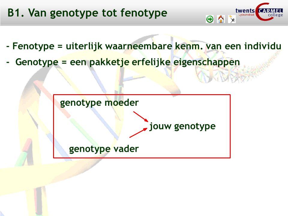 B1. Van genotype tot fenotype