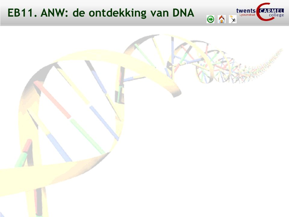 EB11. ANW: de ontdekking van DNA