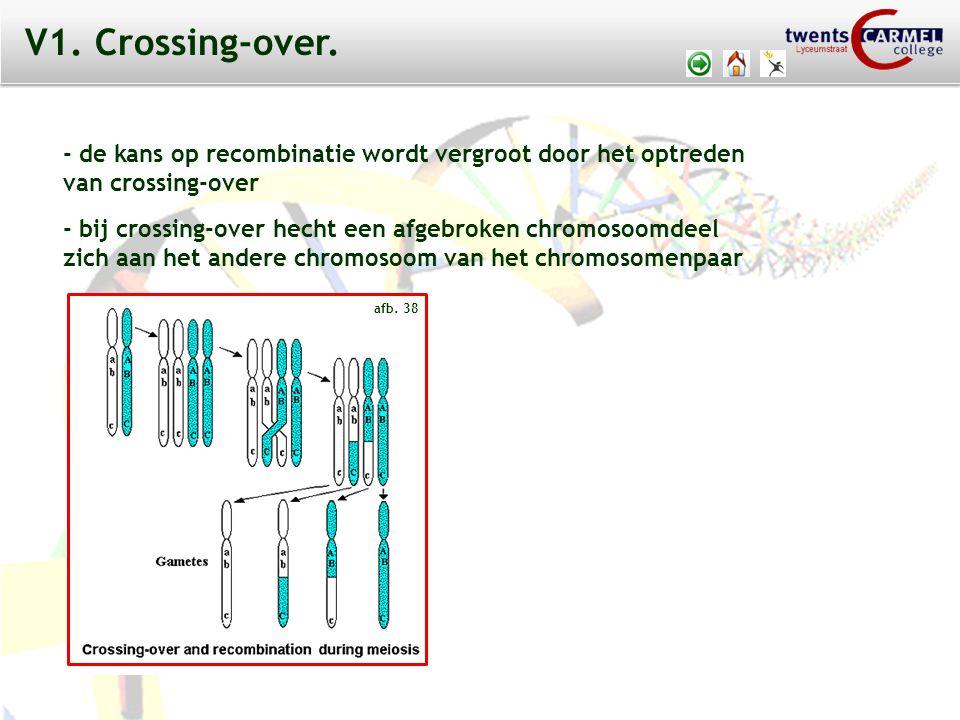V1. Crossing-over. - de kans op recombinatie wordt vergroot door het optreden. van crossing-over.