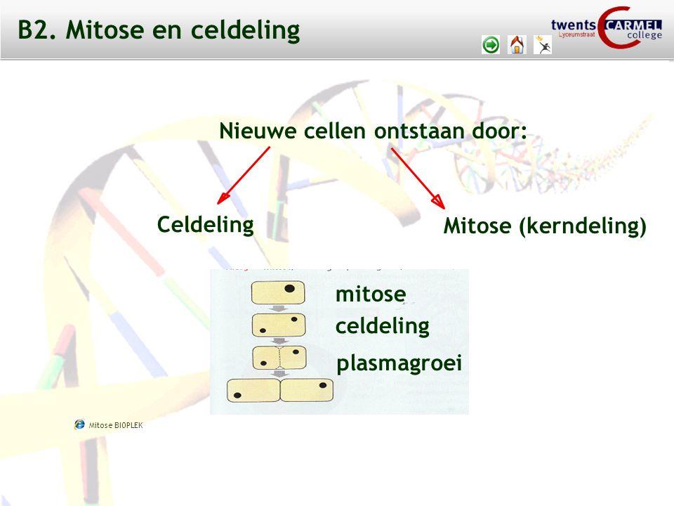 B2. Mitose en celdeling Nieuwe cellen ontstaan door: Celdeling